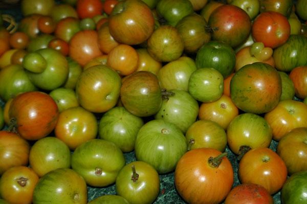 greentomatoes.jpg
