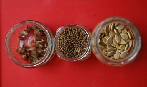corianderseeds.jpg