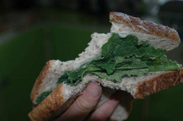borage-sandwich.jpg
