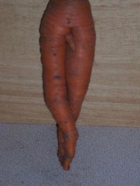 female-carrot.jpg