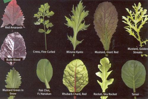 leafidentification.jpg