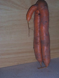 male-carrot.jpg