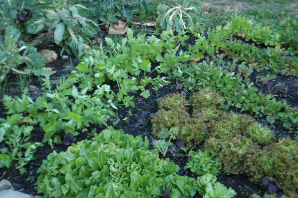 saladgarden.jpg