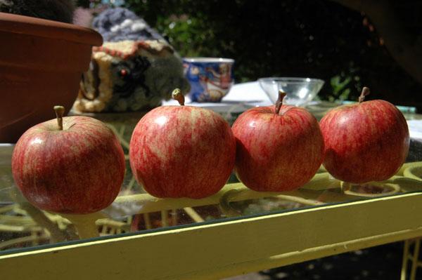 gala-apples.jpg