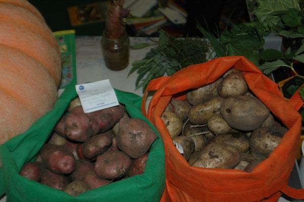 potatoes-from-the-school-ga.jpg